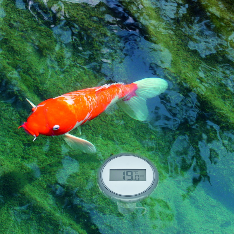 9848-poolthermometer.jpg