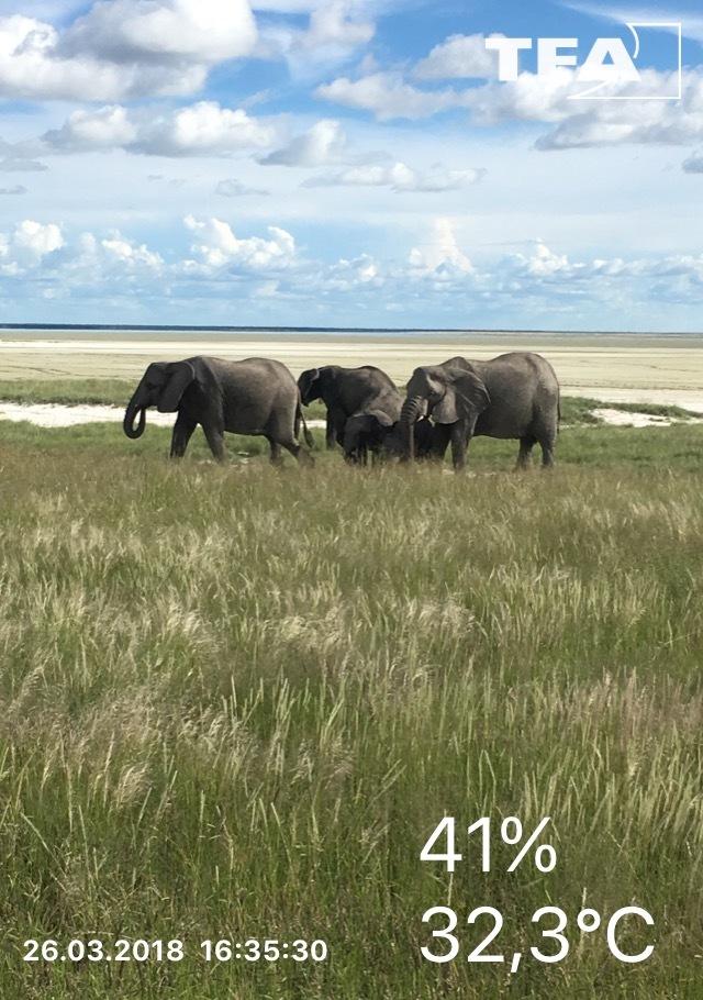 305035_Elefanten.jpg