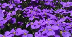 Wettertrend Frühlingsblumen zum Beginn des Frühlings