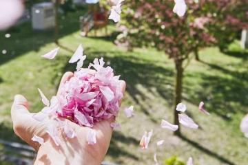 Wettertrend für Deutschland zum kalendarischen Frühlingsanfang von TFA Dostmann. Blütenblätter im Wind