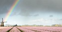 Der Wettertrend für Deutschland illustriert mit einem Hyazinten-Feld mit Windmühle und einem Regenbogen
