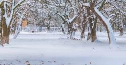Verschneiter Weg, gesäumt von Bäumen. Es ist das Headerbild für den Wettertrend für Deutschland vom 18. Januar 2019