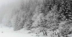Wettertrend grau und nebeliger Wintertag