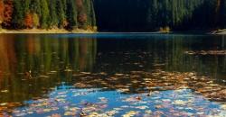 Herbstlaub liegt im See, der See ist umrahmt von Bäumen. Mildes Herbstwetter macht ein warmes Licht.