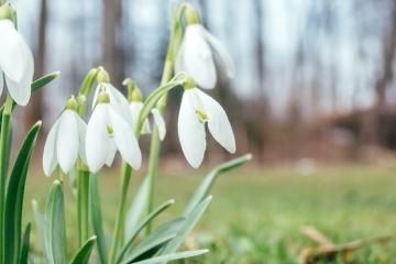 Wettertrend sagt Vorfrühling voraus