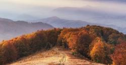 Herbstlicher Wald in der TFA Dostmann Welt.