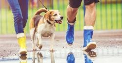 Ein Hund geht mit seinem Eigentümern bei Regen spazieren. Das wird auch kommende Woche so sein laut TFA Wettertrend für Deutschland