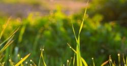 Eine Wiese mit Tautropfen an einem Frühlingsmorgen. Laut Wettertrend für Deutschland müssen wir auf dieses idyllische Bild vorerst verzichten.