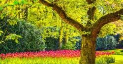 Frühlingsblumen in einem Park und ein großer Baum mit grünen Blättern. Das Licht lässt auch Sonnenschein vermuten und wie schön wäre so ein Wettertrend für den Mai. TFA Dostmann ist der Wetterexperte.