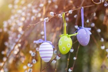 Drei gefärbte Eier hängen an einer Schnur am Ast eines Weidenkätzchenstrauches. Der Wetterexperte TFA Dostmann wünscht frohe Ostern!