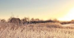 Sonnenaufgang bei einer Windmühle mit Frost überzogenem Feld. Es ist das Headerbild für den Wettertrend für Deutschland vom 25. Januar 2019, erstellt von Roland Schmidt exklusiv für TFA Dostmann